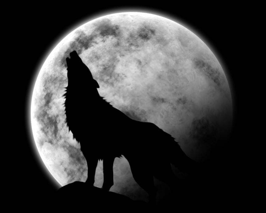 Lapalissade sarkostique: ''la nuit, il n'y a pas desoleil''…