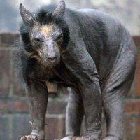 « Vouloir tondre ou raser un ours, c'est en faire un monstre » Proverbe...